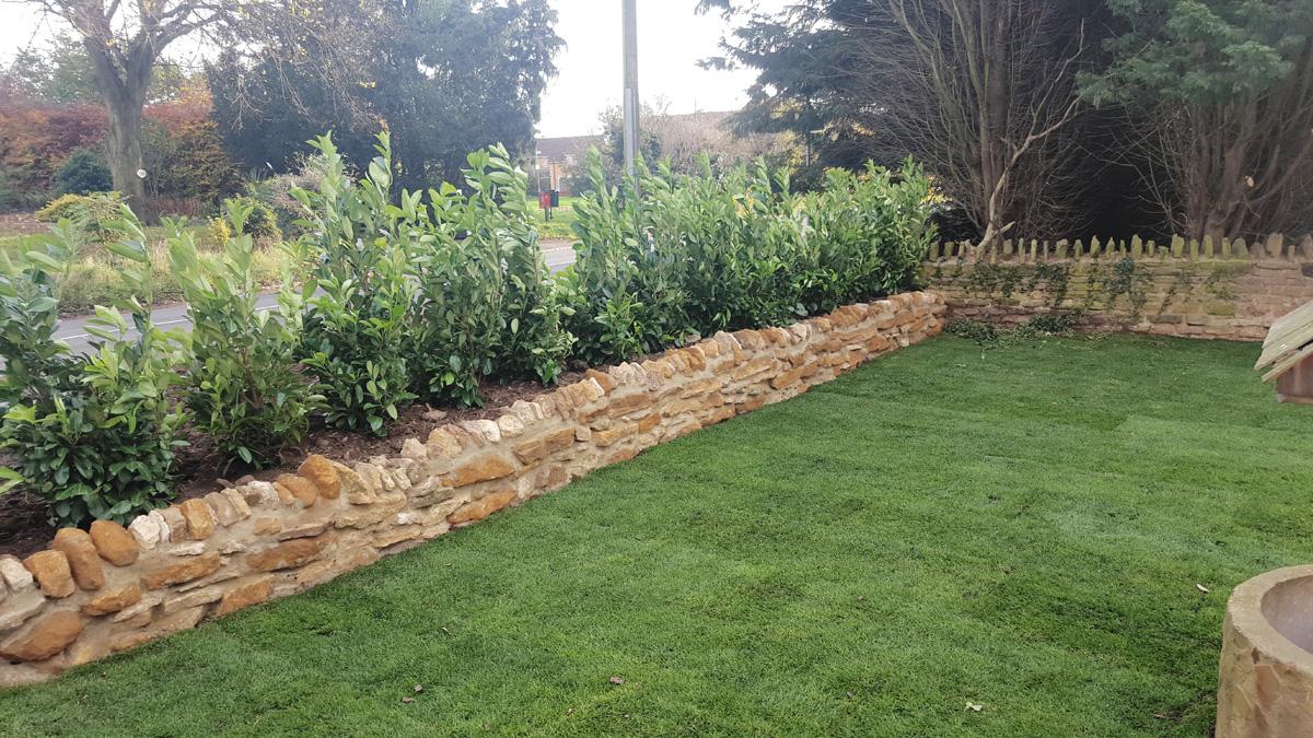 new hedge 1